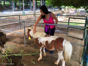 Paradizoo Argentinian horse Tagaytay