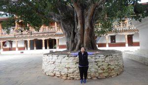 punakha-banyan-tree