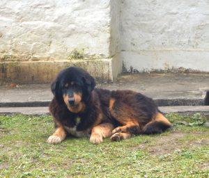 cheri-monastery-dog